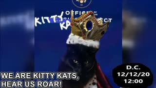 Another Incredibly Important Message from the Kitty Kat Elect