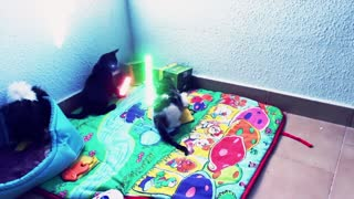 Gatitos Jedi se enfrentan en una épica batalla con sables luminosos - Video