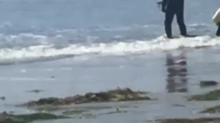 Guy in black wet suit walking slowly into water with flippers