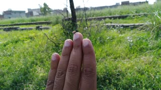 A little bird on finger want to fly to the sky