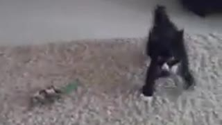 Kung Fu Kitten - Video