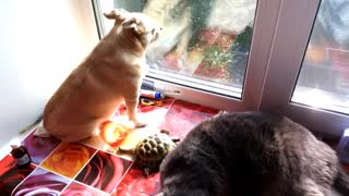 Dog, cat and turtle hang out together