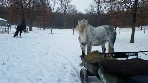 Happy horses playing in snow