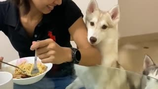 Impatient dog takes begging to whole new level