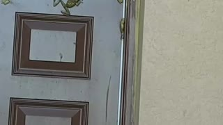 Frogs Gather on Florida Home