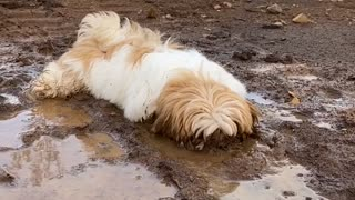 Puppy Dog Enjoys Playing in the Mud