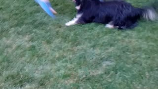 dog happy to play