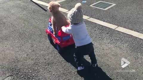 Taxi for my Poodle