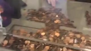 Woman Pays Massive Water Bill With Pennies - Video