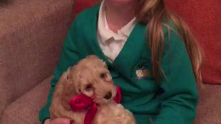 New Puppy Christmas Surprise - Video