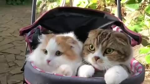 My baby cats  are ready to go out with me