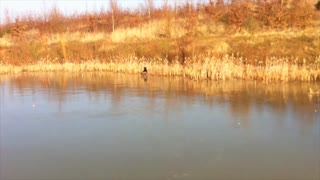 Cute dog plays fetch on frozen lake - Video