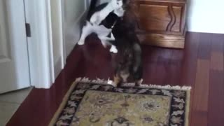 Cats fighting one another  - Video