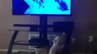 Adorable puppy barks at character on TV - Video