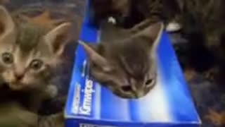 Kitten and his box - Video