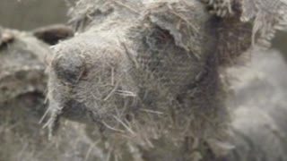 Artist Creates Sculptures Of Dogs With Vintage Textiles - Video