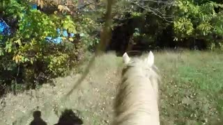 (VIDEO) Riding Spanish Barb Horse! - Video