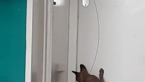 my dog wants to open the door to get out the cat
