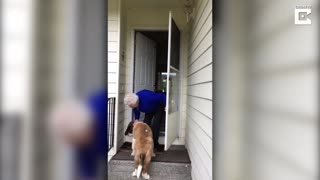 Lonely Widow Finds Unexpected Friend In The Neighbor's Dog - Video