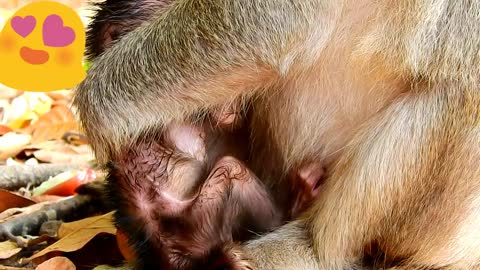 Baby monkey really want milk she need more and more