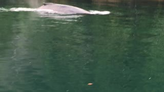 Moby Dick Catches Fish - Video