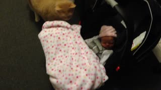 Cats react to new human baby sister - Video