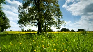 clips about countryside meadow