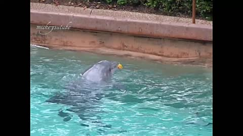 Dolphins Fascination With A Leaf