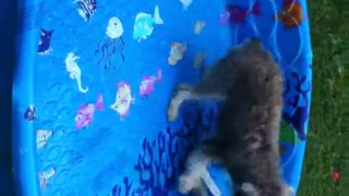 Doggie day care for neurotic pups! - Video