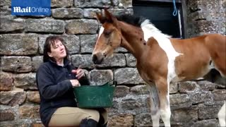 Foal Is Born With An Unusual Pattern - Video