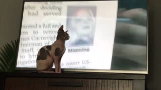 Sphynx loves Alex jones  - Video