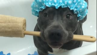 Think this dog is ready for a shower? - Video