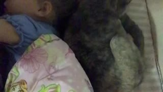 the Cat puts the baby to sleep  - Video