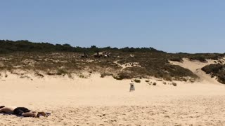 True Nature on a Portuguese beach - Video