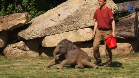 Elephant Mom Can't Wake Up Baby, So The Keepers Step In