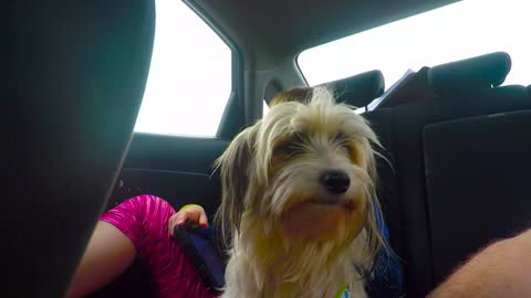 Road Trippin with the Dogs (GoPro)
