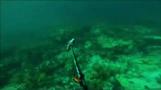 First Person Fish Hunting With GoPro - Video