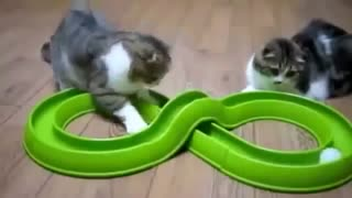 very funny singing cat and two satendra - Video