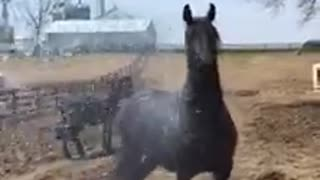 Spoiled Horse Plays in Sprinkler - Video