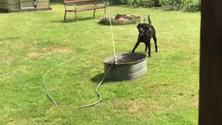 Excited dog thrilled by homemade water fountain