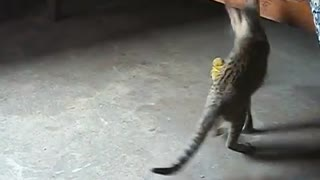 VERY FUNNY CAT PLAYING WITH A DOLL - Video