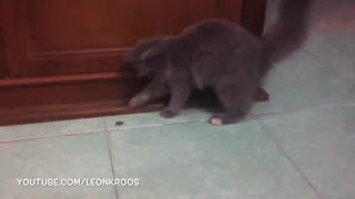 Funny cat scared from tiny little frog - Video