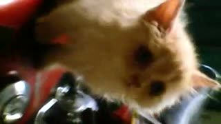 Cat Trying to Run Motor Bike - Video