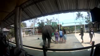 Tourists Dance with Elephants to Gangnam Style - Video
