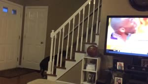 Dog really hates popular sports show - Video