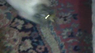 You wont belive what my cat was eating! - Video
