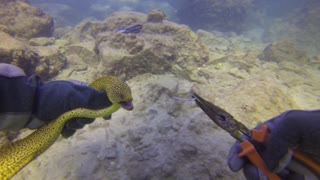 Moray Eel Rescue in the Gold Coast Seaway - Video