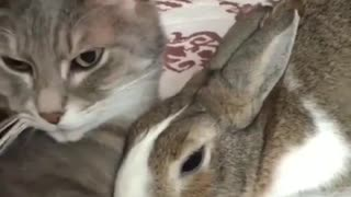 They are unlikely friends - and it's adorable  - Video