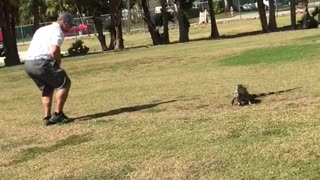 Golfer Takes Quick Break to Catch an Iguana - Video