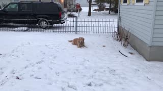 Snow Dog - Video
